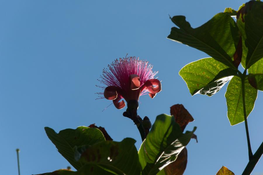 2014_01_Guadeloupe_9
